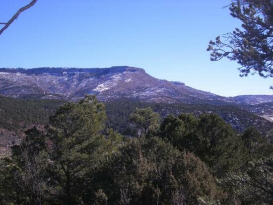 Big Pine Ridge Tract 72 (Big Pine Ridge Tract 72, Weston)